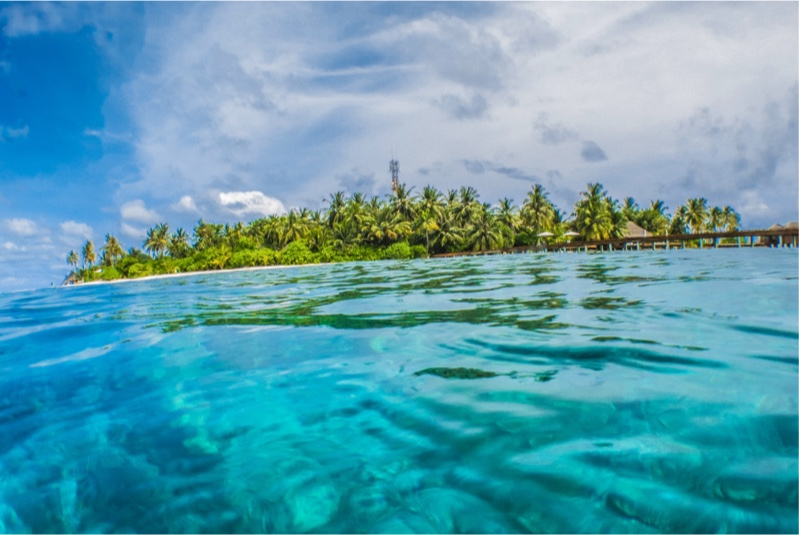 Image for Swimming with the Singing Whales of Tonga